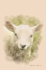 Spring Lamb Watercolour